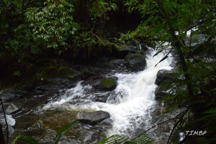 Rivière paradise
