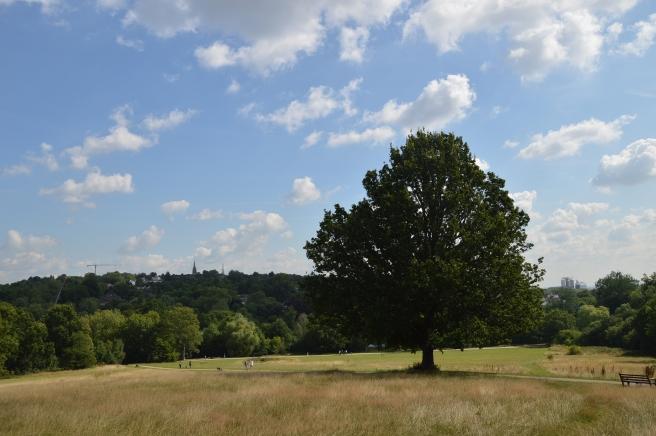 hampstead-heath-summer-2015 (12)
