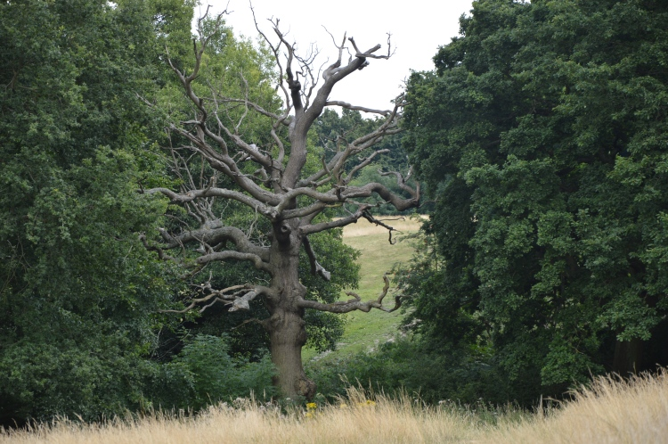 hampstead-heath-summer-2015 (75)